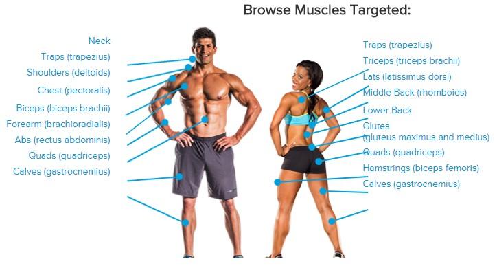 Accès par groupe musculaire bodybuilding.com